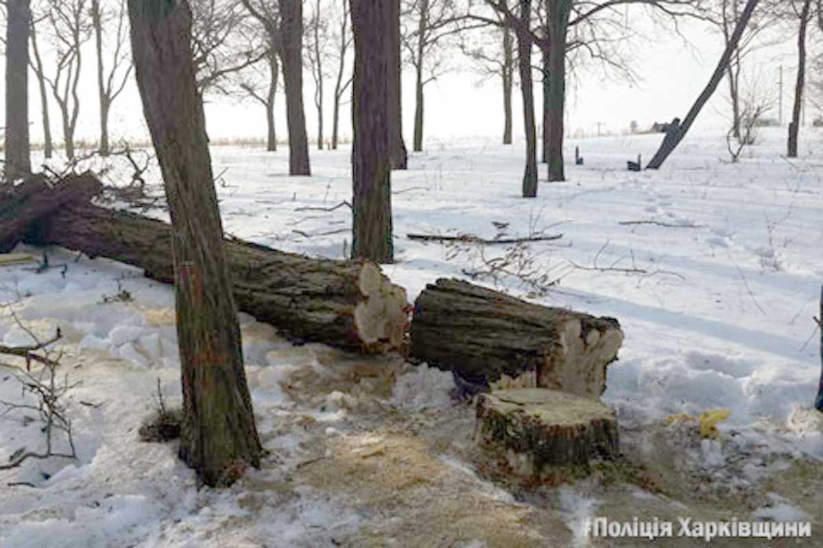 На Харьковщине задержали деда-лесоруба