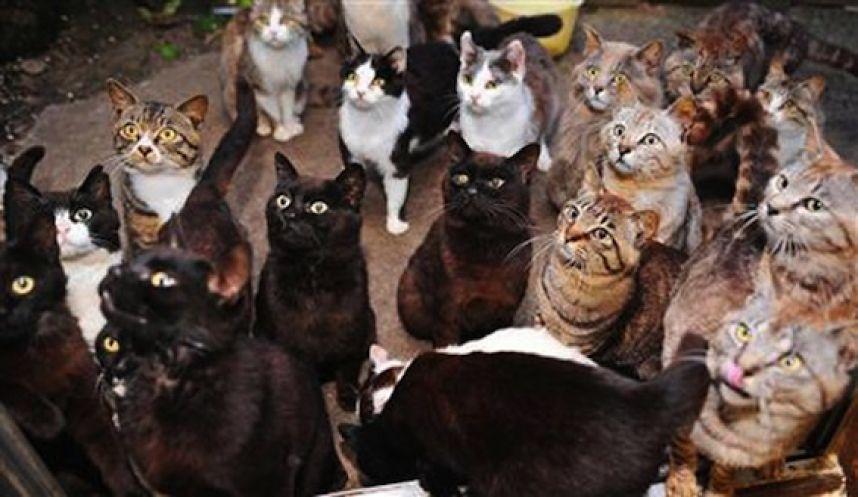 ВОмске в личном доме обнаружили обглоданный котами труп пенсионера