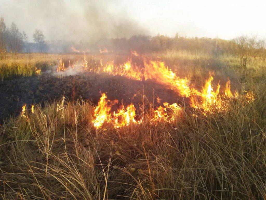 Масштабный лесной пожар наХарьковщине устранили: Наместе всю ночь дежурили cотрудники экстренных служб