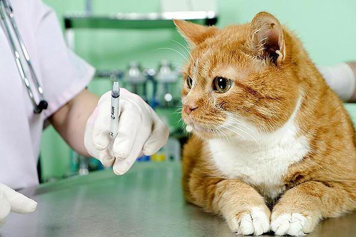 коронавирус кошек прививка